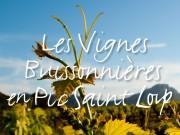 Vignes buissonnières 2018